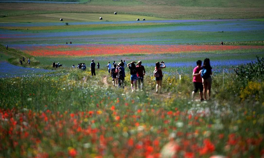 Durante o período de La Fiorata, turistas invadem os campos de flores e lentilhas de Castelluccio di Norcia, na Úmbria, região central da Itália Foto: TIZIANA FABI / AFP