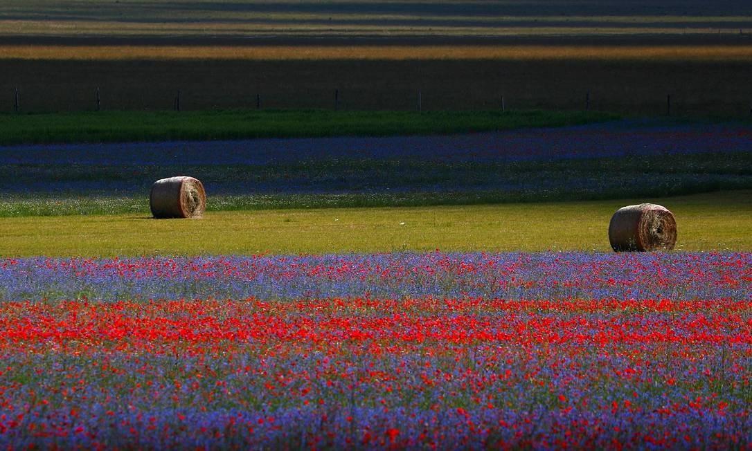 Os campos floridos de Castelluccio di Norcia, na Úmbria, região central da Itália Foto: GUGLIELMO MANGIAPANE / REUTERS