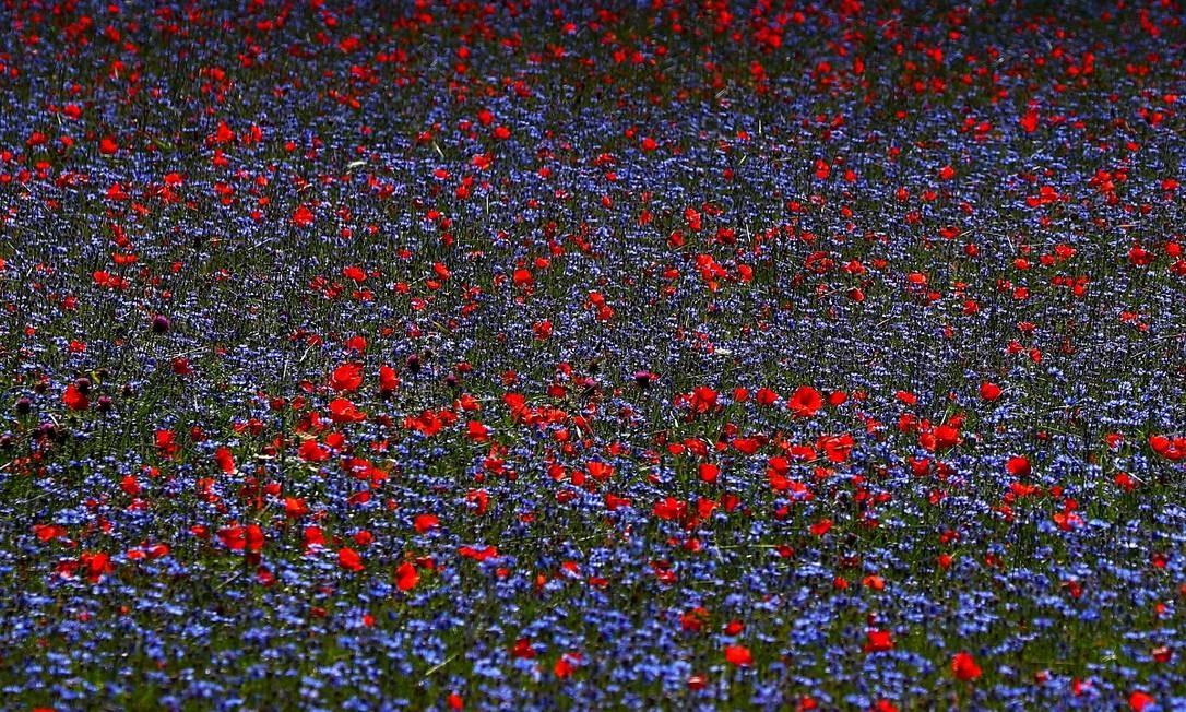Impressionismo em estado natural nos campos floridos de Castelluccio di Norcia, na Úmbria, região central da Itália Foto: GUGLIELMO MANGIAPANE / REUTERS