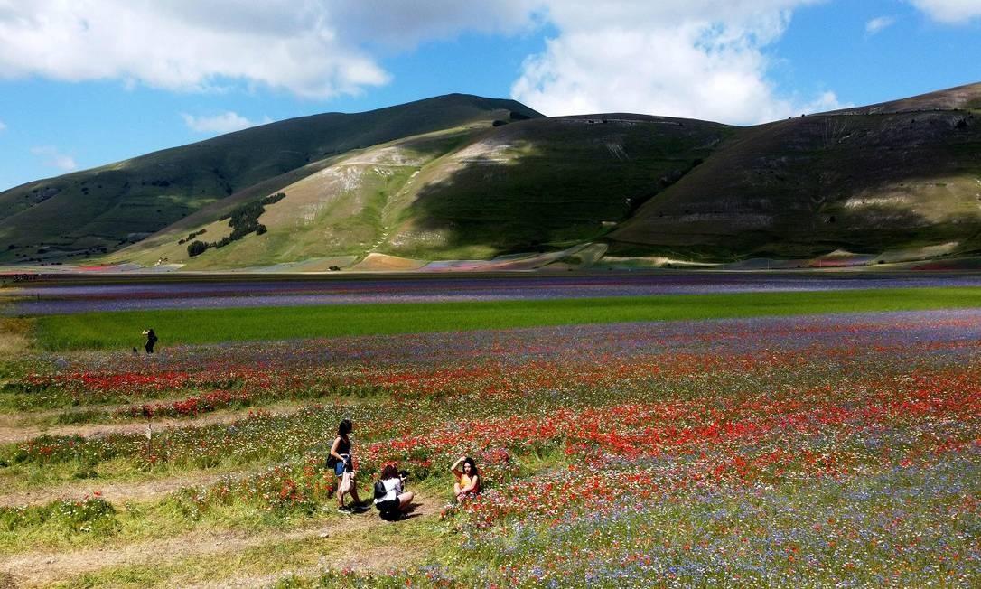 Aos pés dos Montes Sibillini, os campos de Castelluccio di Norcia são tomados pelas cores das flores silvestres entre maio e julho Foto: VINCENZO PINTO / AFP