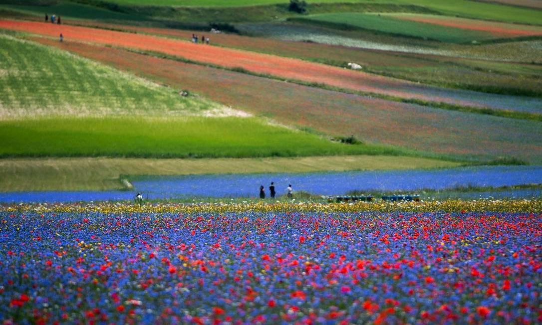 Os campos floridos de Castelluccio di Norcia, na Úmbria, região central da Itália Foto: TIZIANA FABI / AFP