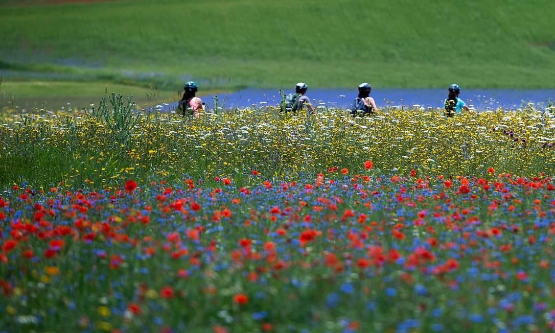 Passeios de bicicleta também são muito populares entre os turistas que visitam os campos floridos de Castelluccio di Norcia, na Úmbria, região central da Itália Foto: TIZIANA FABI / AFP