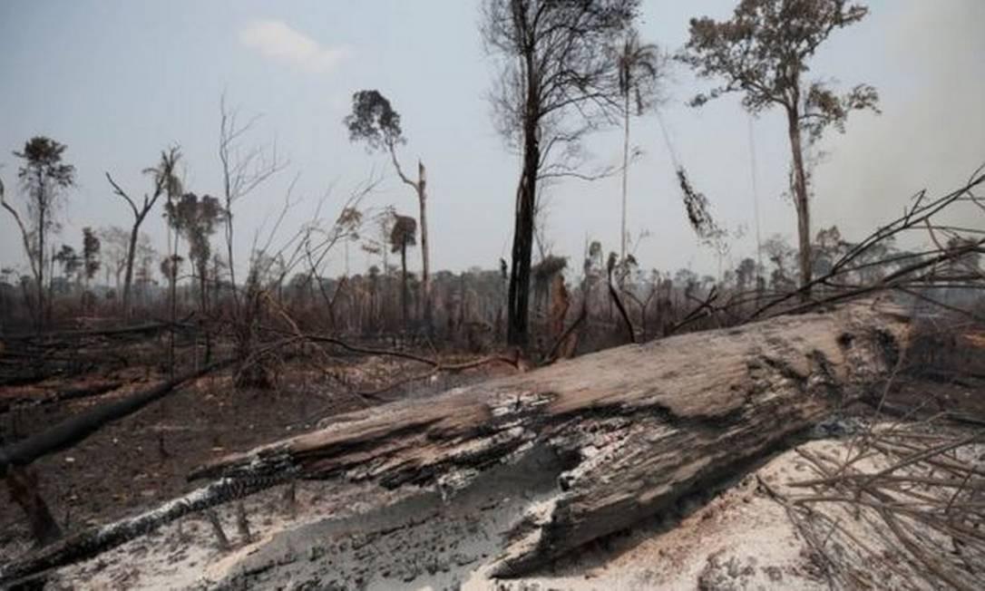 Ibama só terá dinheiro para fiscalização este ano graças a dinheiro recuperado pela Lava Jato Foto: Reuters