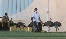 Em isolamento no Palácio da Alvorada , o presidente Jair Bolsonaro alimenta emas Foto: Jorge William / Agência O Globo
