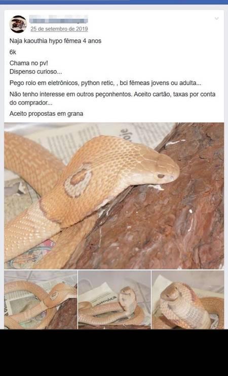 Anúncio de naja por R$ 6 mil em grupo do Facebook Foto: Reprodução