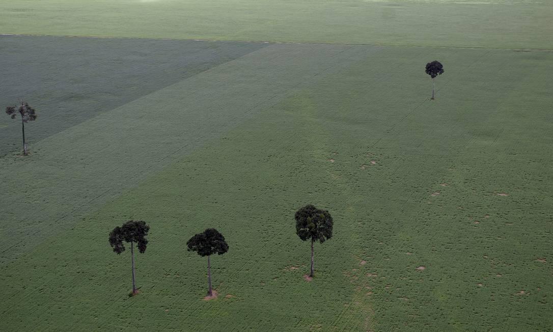 Plantação de soja no Pará: fronteira agrícola vem avançando lentamente sobre a floresta Foto: Ricardo Beliel / LightRocket via Getty Images