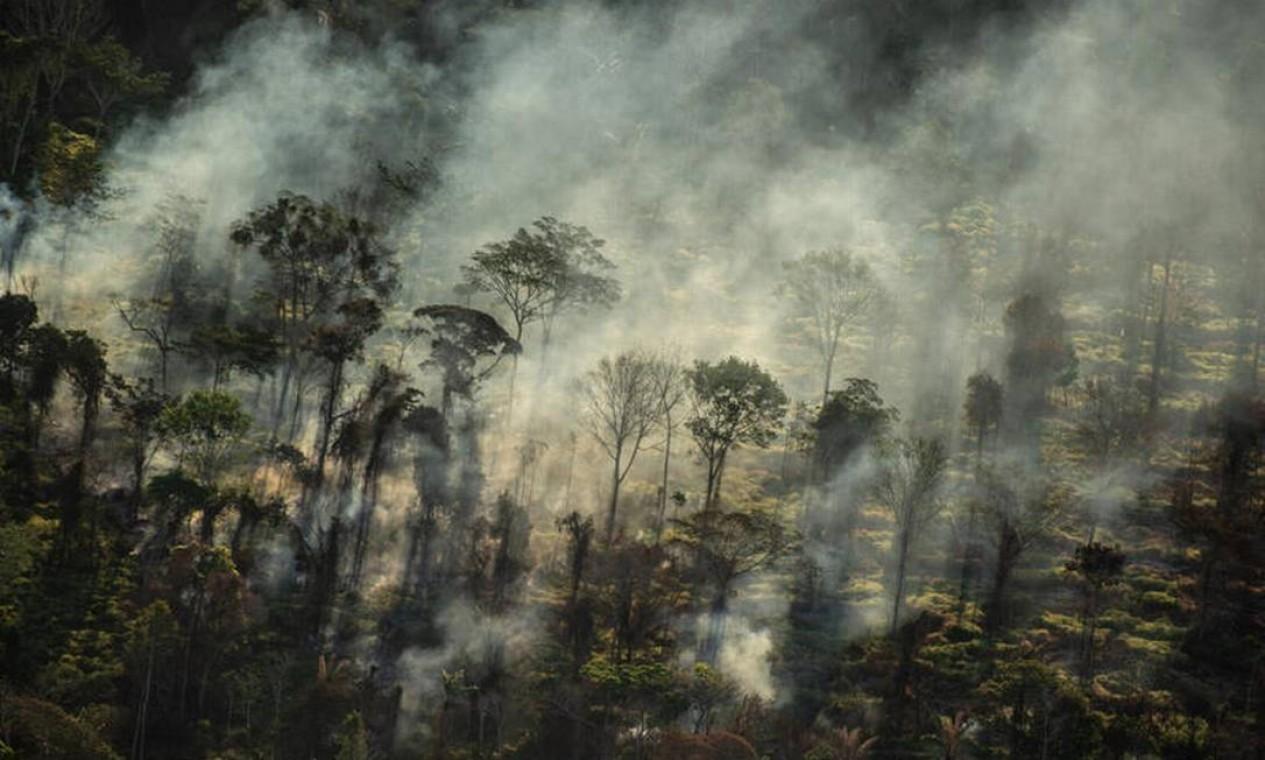 Foco de calor direto em floresta, próximo a área recém desmatada, com alerta Deter, em Alta Floresta (MT) Foto: Christian Braga/Greenpeace/Divulgação / © Christian Braga / Greenpeace