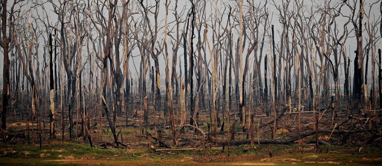 Futuro consumido. Área da Amazônia em Rondônia atingida por queimada em agosto de 2019: a perda de vegetação eleva a temperatura da floresta, afetando o regime de chuvas, um fator decisivo para a produção agrícola do país Foto: CARL DE SOUZA / AFP