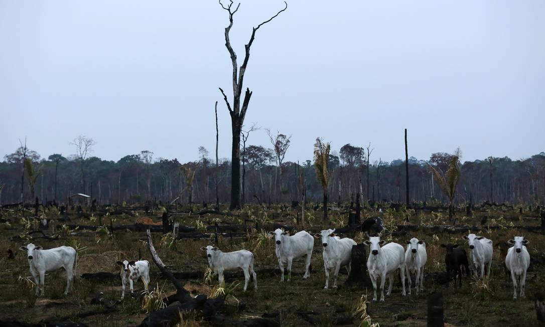 A derrubada da floresta nativa para a criação de gado esgota com o solo em poucos anos. Na foto, área desmatada em Apuí, no Amazonas Foto: BRUNO KELLY / Reuters