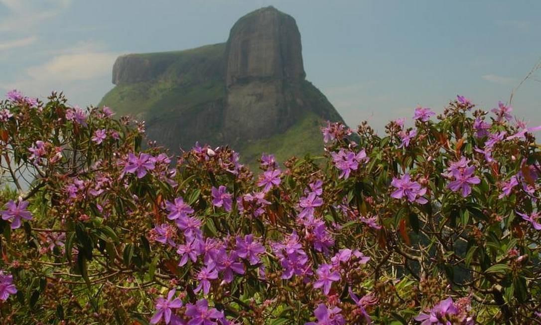 Riqueza. Flores que só nascem nas montanhas do tipo pão de açúcar: se retiradas desses locais, elas morrem Foto: Claudio Fraga