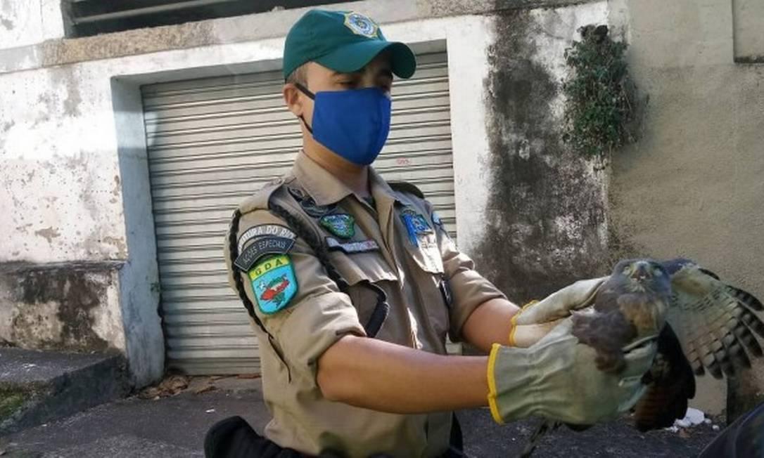 Coruja-baraqueira foi um dos 700 animais resgatados neste ano Foto: Divulgação