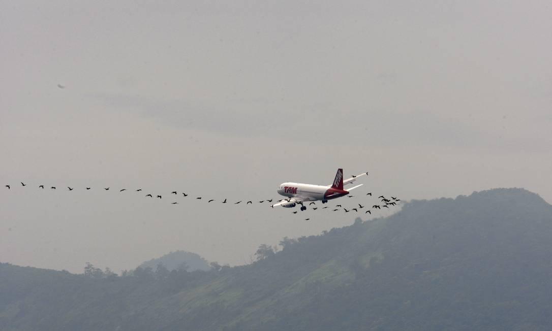 Perigos na aviação: avião sobrevoa o Aeroporto Santos Dumont cercado de biguás. Prêmio CNT de jornalismo na categoria Fotografia em 2009 Foto: Domingos Peixoto / Agência O Globo