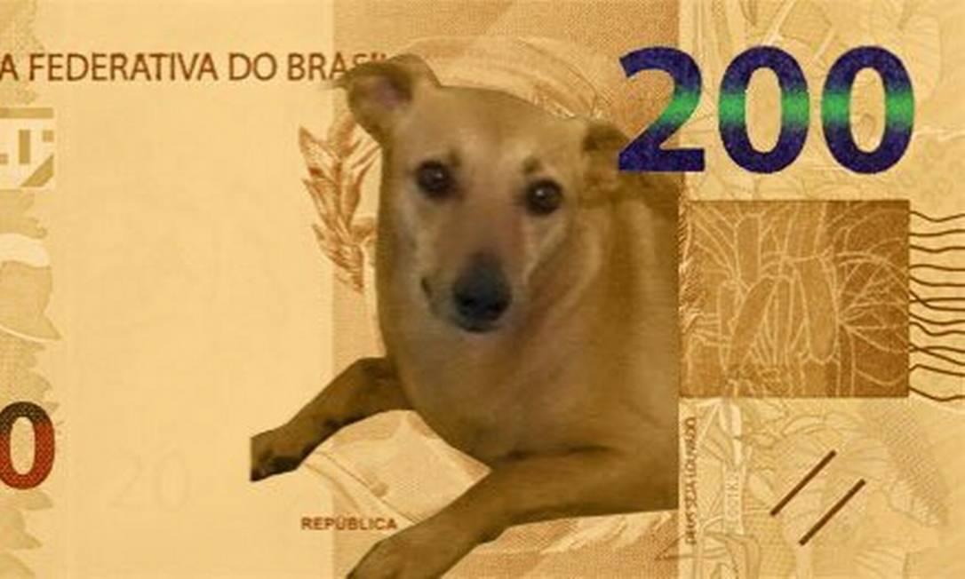 Oficialmente, a cédula de R$ 200 será ilustrada pelo lobo-guará. Mas internautas sugerem outros animais, como o vira-lata caramelo Foto: Reprodução / Twitter