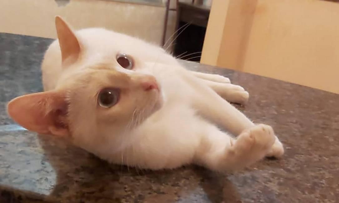 Branca de Neve tem sete meses e estará disponível para adoção neste sábado Foto: Divulgação