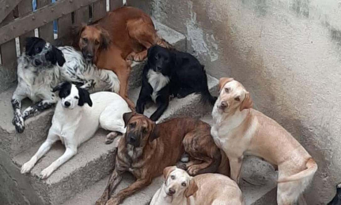 Alguns dos animais que Heleyse de Souza Azevedo mantém em casa Foto: Heleyse de Souza Azevedo / Reprodução