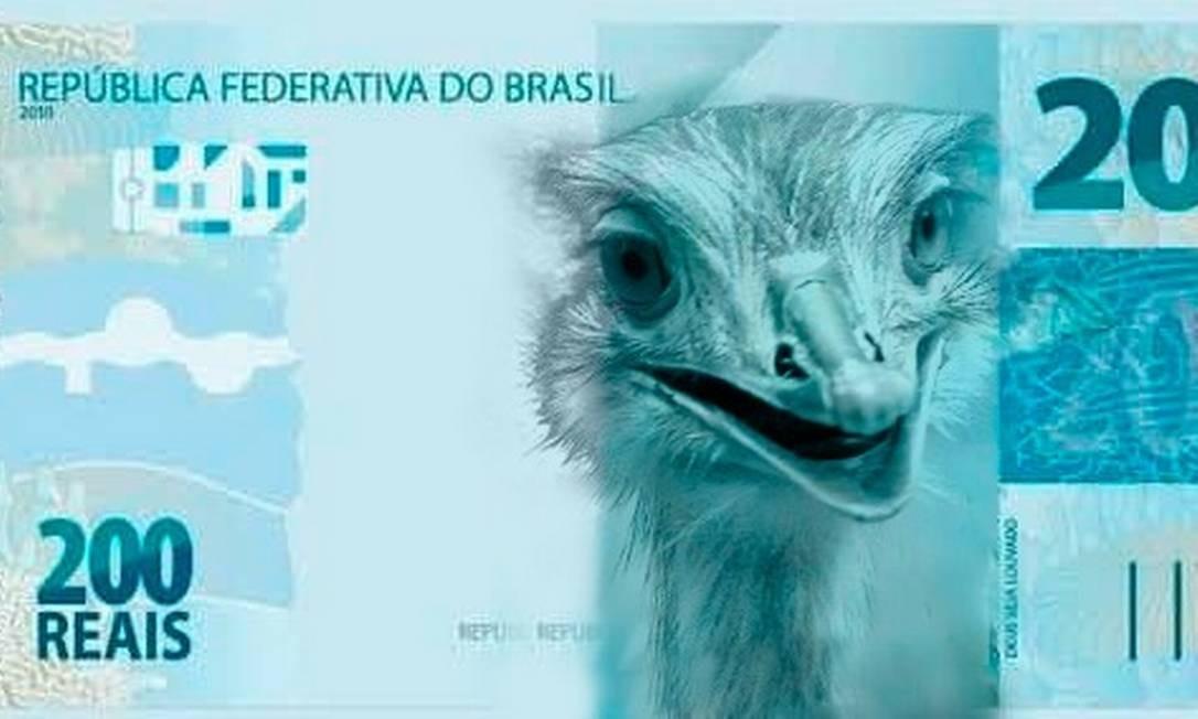 Ema. Animal ganhou destaque por conta do episódio em que picou o presidente Jair Bolsonaro Foto: