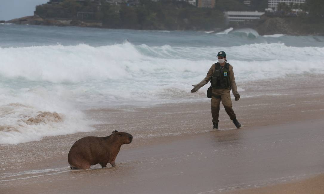 Operação para capturar o roedor durou quase três horas Foto: Pedro Teixeira / Agência O Globo
