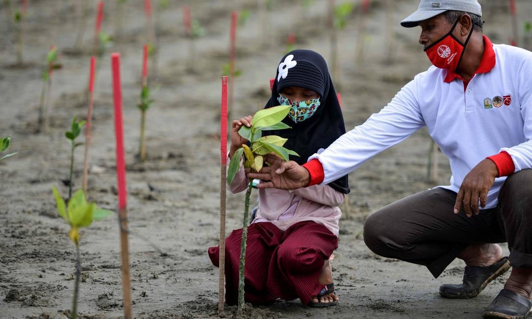 Um homem ensina uma criança a plantar árvores de mangue em Pekan Bada, província de Aceh, Indonésia Foto: CHAIDEER MAHYUDDIN / AFP