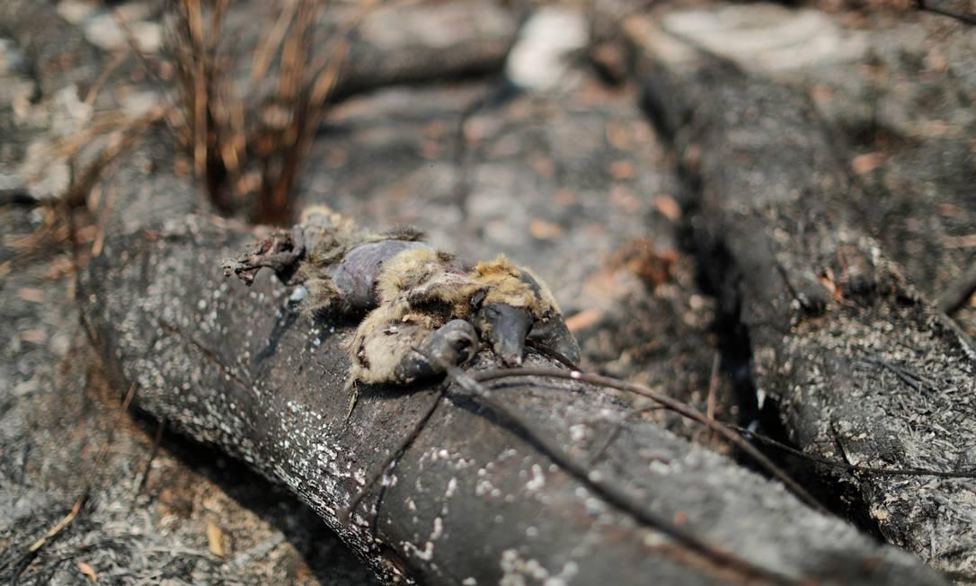 Um tamanduá morto é visto em um tronco queimado em uma área da selva amazônica, perto de Apuí, no Amazonas Foto: UESLEI MARCELINO / REUTERS