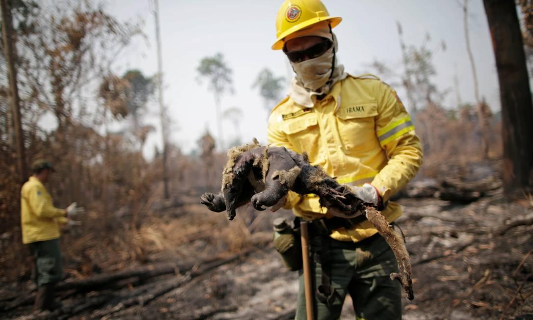 Membro da brigada de incêndio do Instituto Brasileiro do Meio Ambiente e dos Recursos Naturais Renováveis (Ibama) encontra tamanduá morto enquanto tentava controlar focos de incêndios, em uma área da selva amazônica perto de Apuí, no Amazonas Foto: UESLEI MARCELINO / REUTERS