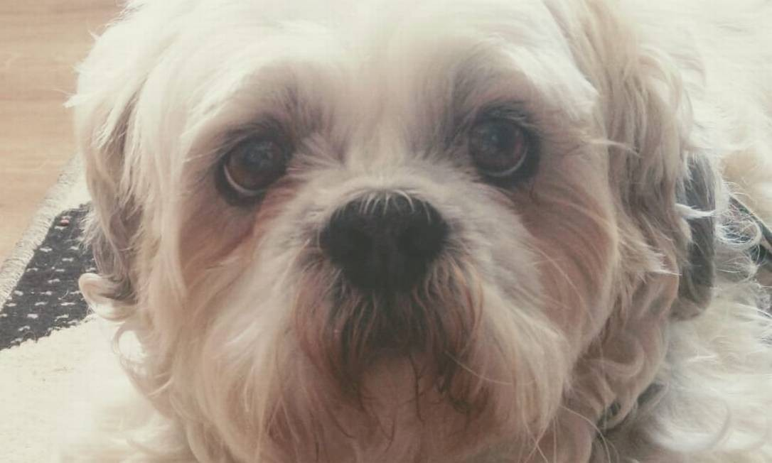 O cachorro Boss, da raça Shih-Tzu, foi incluído como autor de uma ação na Justiça Foto: Reprodução