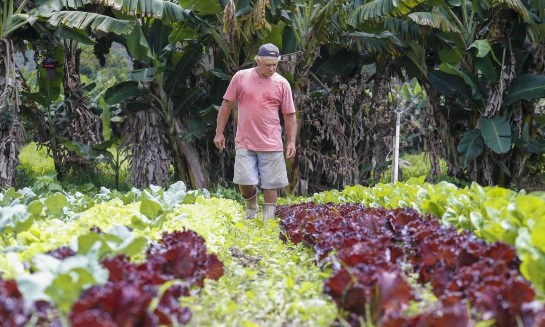 Diversidade. O produtor Levi Gonçalves caminha entre os pés de hortaliças da fazenda Pedras Altas, pioneira no cultivo de orgânicos no estado Foto: Marcelo de Jesus/21-2-2020