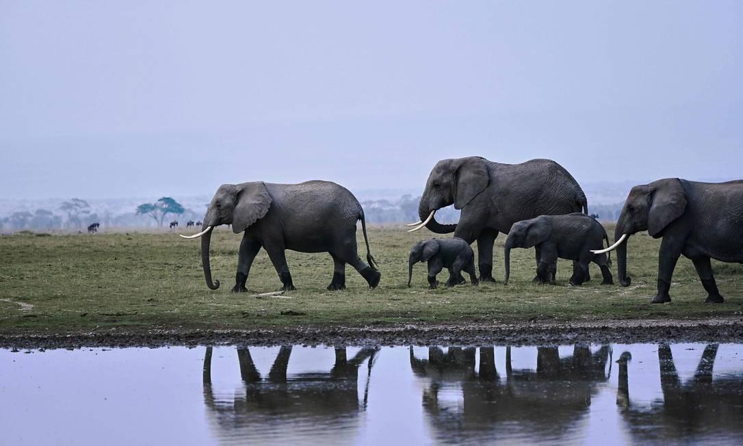 Manada de elefantes circulando em parque Foto: TONY KARUMBA / AFP