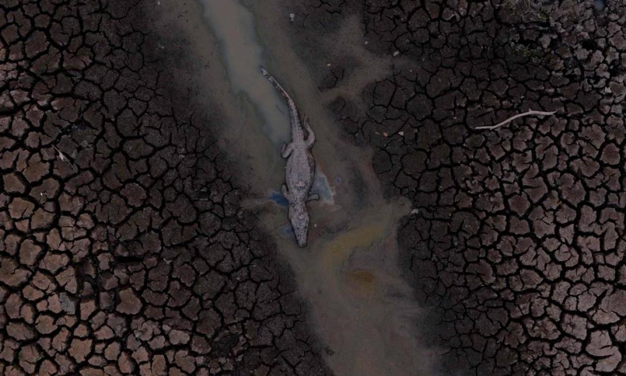 Um jacaré morto é visto no Pantanal na estrada do parque Transpantaneira, no estado de Mato Grosso. O Pantanal está sofrendo seus piores incêndios em mais de 47 anos, destruindo vastas áreas de vegetação e causando a morte de animais pegos no fogo ou fumaça Foto: MAURO PIMENTEL / AFP - 12/09/2020