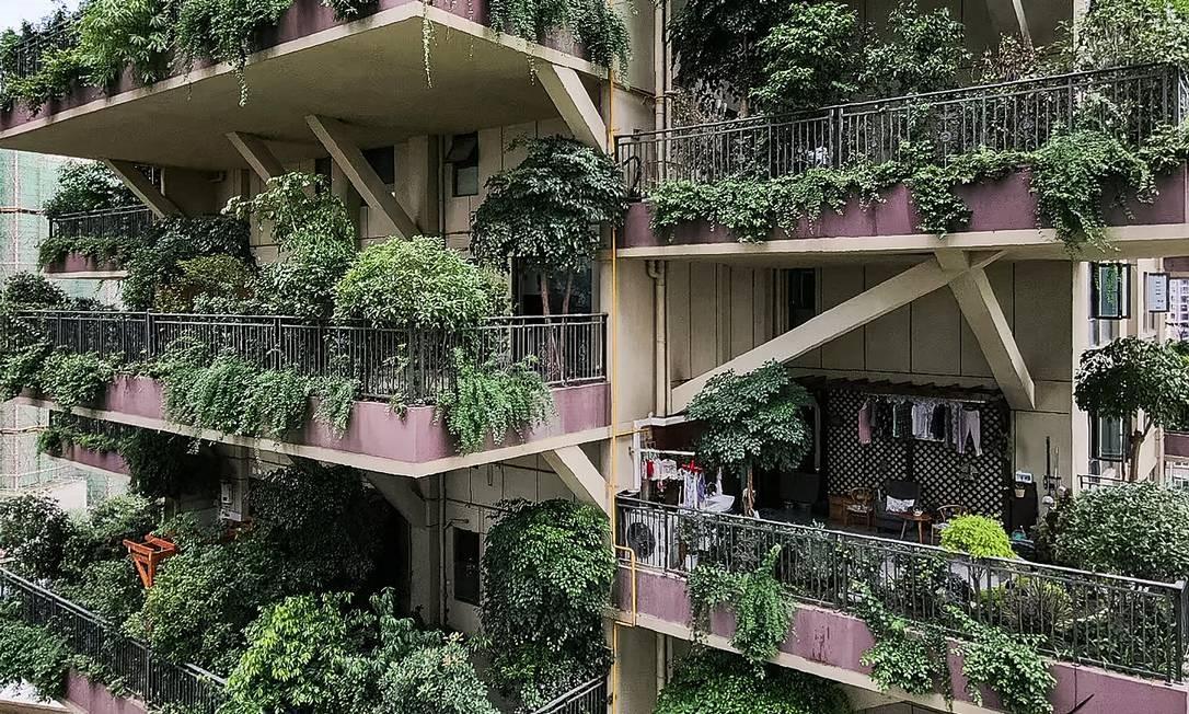 """O condominio Jardim Floresta Qiyi"""" tem varandas com vegetação abundante, dando aos edifícios a aparência de uma pequena selva e fica em Chengdu, capital da província chinesa de Sichuan Foto: STR / AFP"""