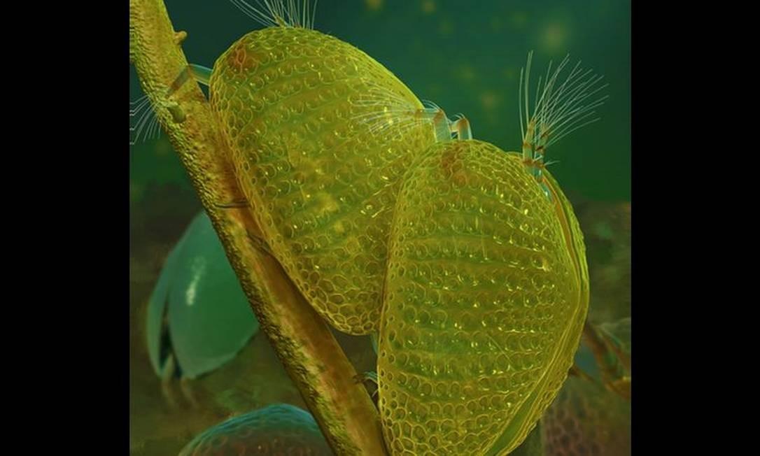Ilustração da reprodução dos ostracodes; após acasalamento, fêmea ficou presa em gota de âmbar, guardando o espermatozoide que foi revelado cerca de 100 milhões de anos depois Foto: DIVULGAÇÃO/DINGHUA YANG