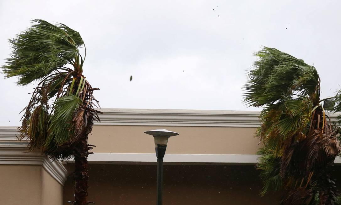 Palmeiras balançam com o vento causado pelo furacão Sally em Mobile, Alabama Foto: JONATHAN BACHMAN / REUTERS