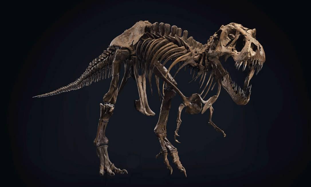 Stan, um dos mais completos esqueletos de T-rex, será leilado em outubro Foto: Divulgação