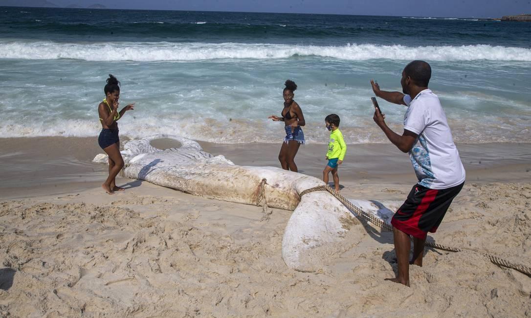 Curiosos se aproximam dos restos mortais da baleia para tirar fotos. Área foi isolada por homens do Corpo de Bombeiros Foto: ANTONIO SCORZA / Agência O Globo