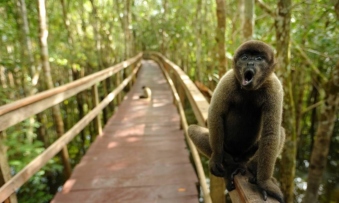 O contato com a natureza é a grande atração do Juma Amazon Lodge, cujo acesso é feito de barco Foto: Divulgação