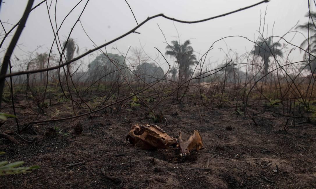 Carcaça de animal em meio a vegetação Foto: MAURO PIMENTEL / AFP