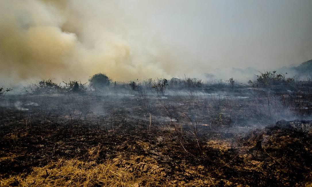 Incêndo no pantanal, na região do municipio de Pocone (MT) Foto: Daurio Filho / Agência O Globo