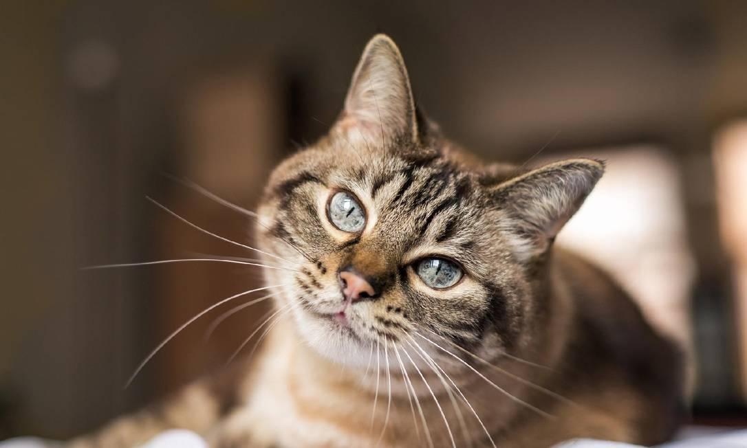 Estudo sobre gato que contraiu Covid-19 na Espanha concluiu que não foi o vírus que matou o animal Foto: Infoglobo