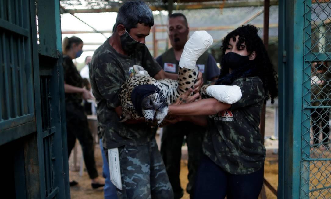 Ousado é carregado por trabalhadores do Instituto Nex Foto: UESLEI MARCELINO / REUTERS
