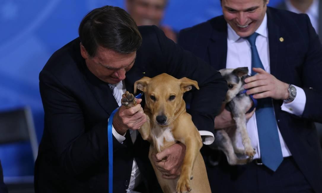 Bolsonaro e seu cachorro Nestor, durante cerimônia de sanção do projeto de lei que elevou a pena para quem praticar crimes de maus-tratos contra animais Foto: Jorge William / Agência O Globo