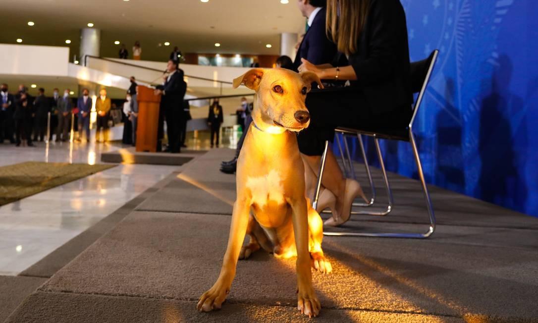Projeto de lei, de autoria do deputado federal Fred Costa (Patriota-MG), aumentou as penas para quem praticar maus-tratos contra cães e gatos Foto: Carolina Antunes / PR