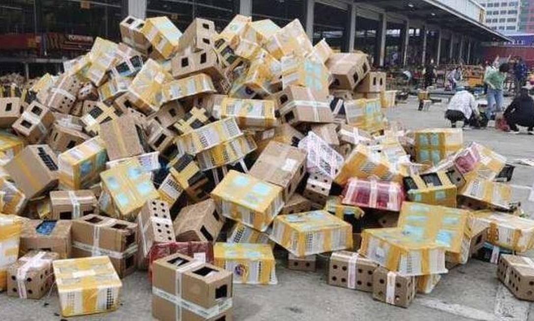 Animais de estimação mortos foram encontrados na cidade de Luohe,naChina. Foto: Divulgação/Wutuobang