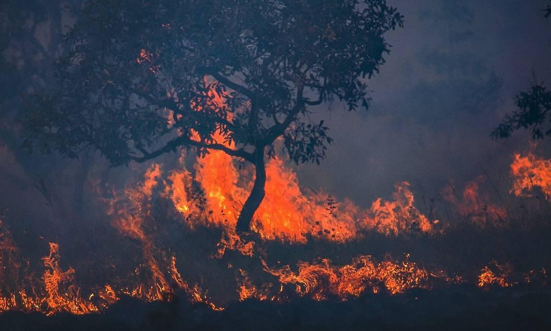 As queimadas começaram em junho e já são consideradas as mais devastadoras dos últimos 50 anos pelos especialistas Foto: Araquém Alcântara / Divulgação