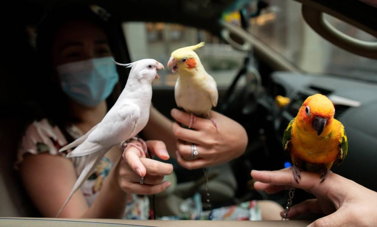 Uma mulher a bordo de seu veículo mostra seus pássaros de estimação enquanto eles fazem fila para receber uma bênção de drive-thru em meio à doença do coronavírus nas Filipinas Foto: ELOISA LOPEZ / REUTERS