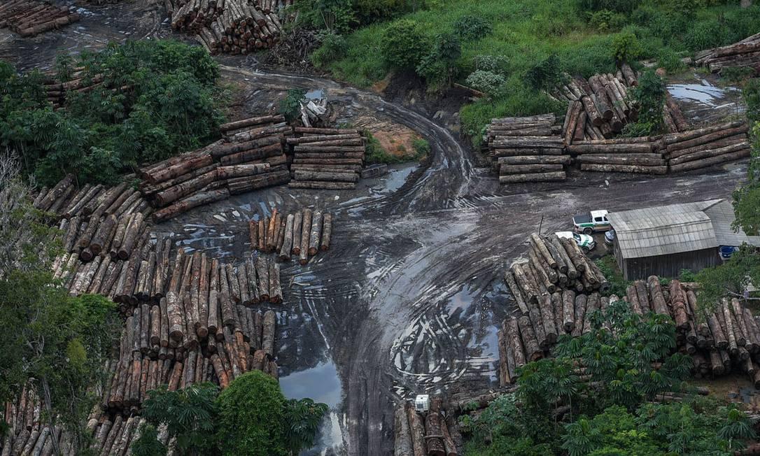 Extração de madeira na Amazônia: atividades ilegais avançam diante da redução de gastos públicos com fiscalização ambiental Foto: Agência Brasil