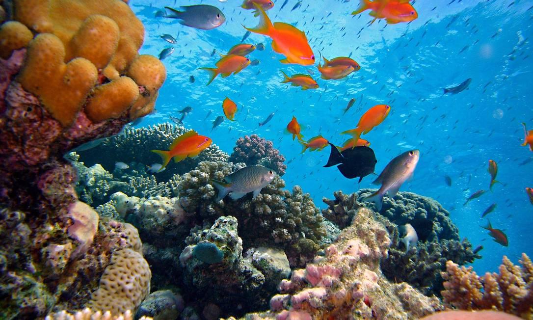 Imagem ilustrativa de um recife de corais Foto: Pixabay