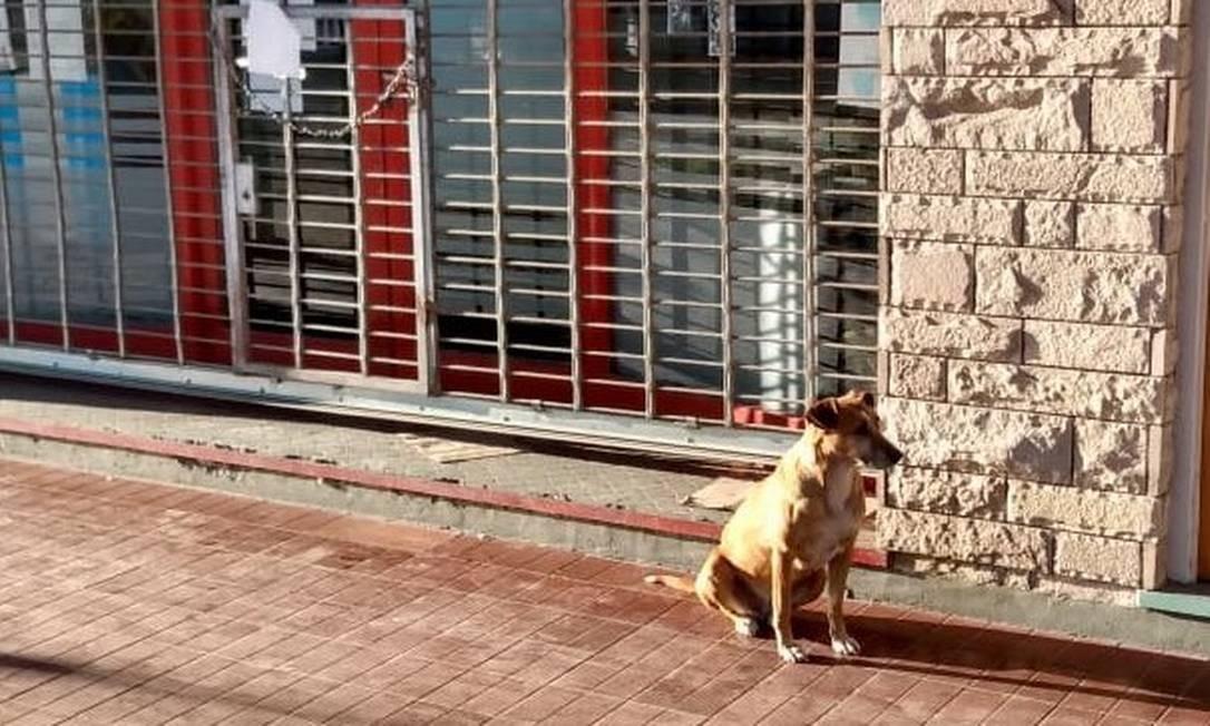A cadela Bianca passava os dias com Eugênia Franco há pelo menos 10 anos Foto: Reprodução/Twitter @NIrrutia