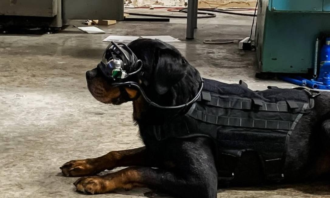 Os óculos de realidade aumentada permitem que soldados deem comandos visuais aos cães a distância Foto: US Army