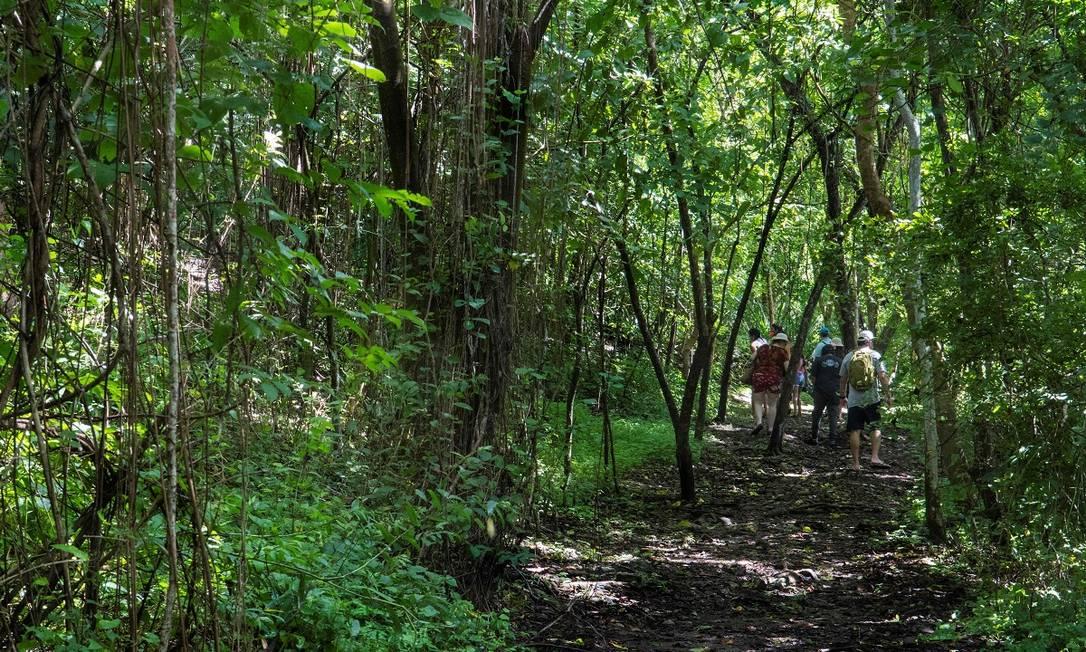 Grupo de turistas caminha por uma das trilhas abertas pela área do Parque Nacional da Ilha San Lucas, na Costa Rica Foto: Ezequiel Becerra / AFP