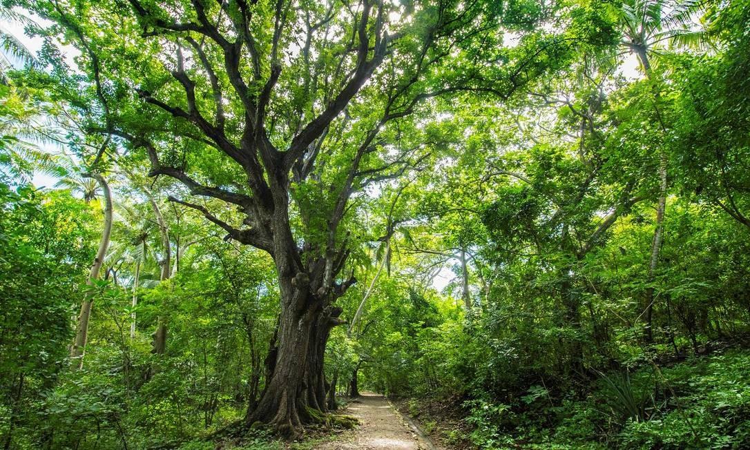 Com 500 hectares cobertos por floresta tropical, a ilha foi transformada no Parque Nacional da Ilha San Lucas Foto: Ezequiel Becerra / AFP
