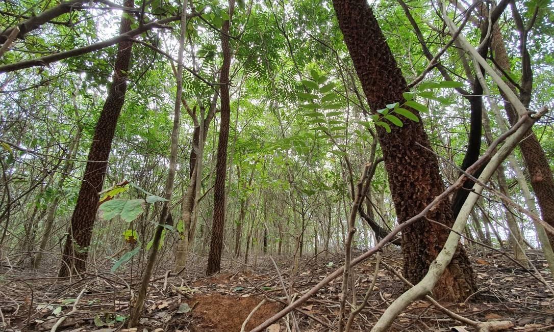 Arco do desmatamento: florestas secundárias às margens da BR-158, na fronteira do Mato Grosso com o Pará Foto: Ana Lucia Azevedo